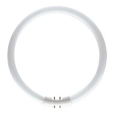 PHILIPS MASTER TL5 Circular 55W/830 Culot 2GX13